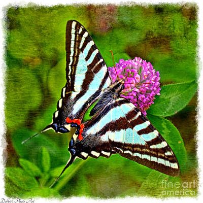 Photograph -  Zebra Swallowtail Butterfly by Debbie Portwood