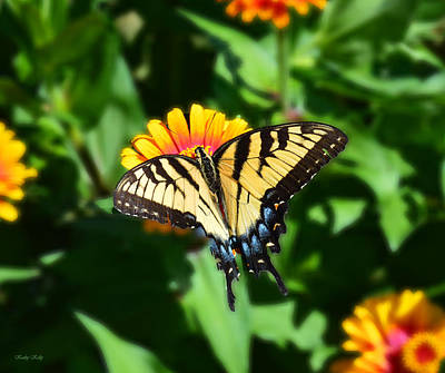 Zinnia Elegans Photograph - Tiger Swallowtail Butterfly by Kathy Kelly