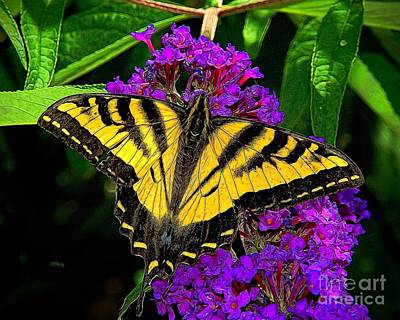 Photograph - Tiger Swallowtail Butterfly by Patrick Witz
