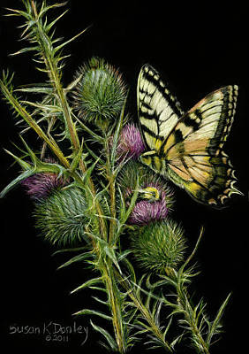 Drawing - Tiger Swallowtail Feasting Amidst Thethorns by Susan Donley