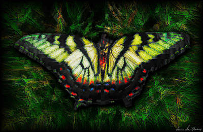 Art Print featuring the photograph Tiger Swallowtail by Iowan Stone-Flowers
