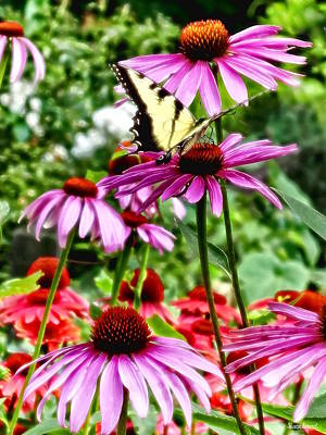Coneflowers Photograph - Tiger Swallowtail On Coneflower by Susan Savad