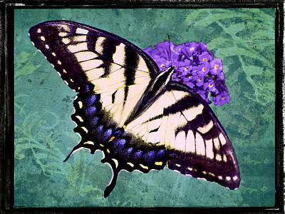 Photograph - Tiger Swallowtail Turf by Leda Robertson