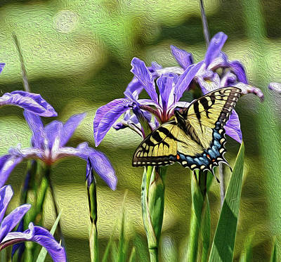 Photograph - Tiger Swallowtail With Edit by Ronda Ryan