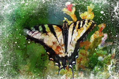 Photograph - Tiger Swallowtail Butterfly 4 by Debbie Portwood
