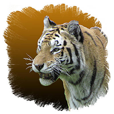Photograph - Tiger by T Guy Spencer