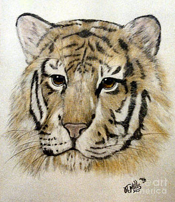 Drawing - Tiger by Terri Mills