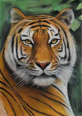 Drawing - Tiger - The Heart Of India by Vishvesh Tadsare