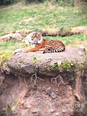Photograph - Tiger by Vennie Kocsis