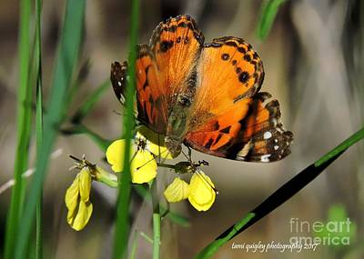 Photograph - Tiger Wings  by Tami Quigley