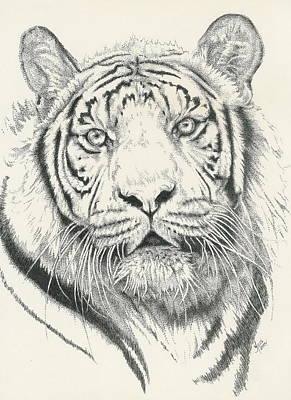 Tigerlily Art Print by Barbara Keith