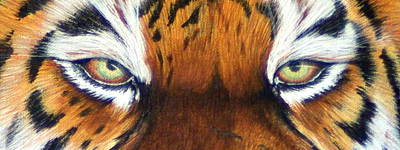 The Tiger Painting - Tigers Eye Two by Laurie Bath
