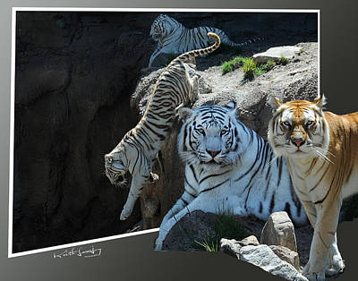 Tigers Out Of Frame Art Print