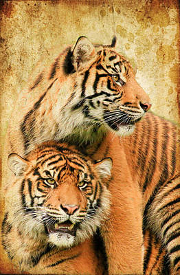 Photograph - Tigers by Steve McKinzie