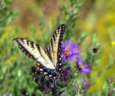 Photograph - Tigerswallowtail And Bee Pastel by George Jones