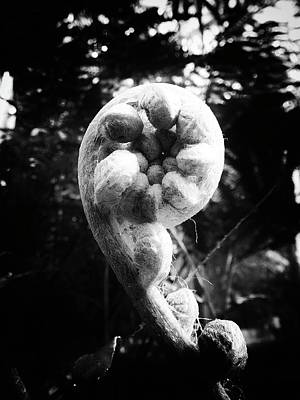 Photograph - Tightly Wound by Karen Stahlros