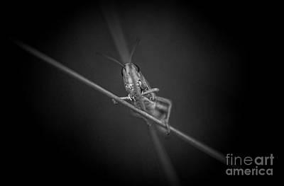 Tightrope Walker Original by Lyudmila Prokopenko