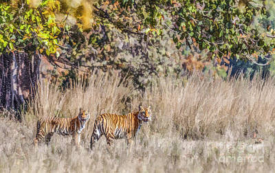 Digital Art - Tigress And Cub Kanha National Park India by Liz Leyden