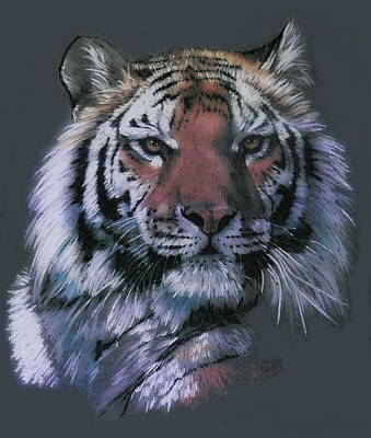 Drawing - Tigress by Barbara Keith