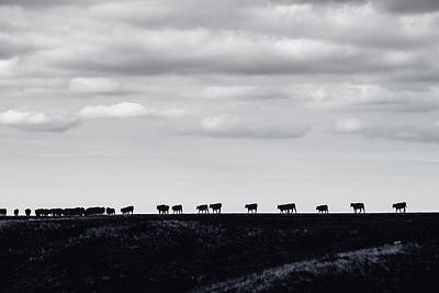 Photograph - Til The Cows Come Home by Debi Bishop