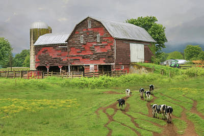 Photograph - Til The Cows Come Home by Lori Deiter