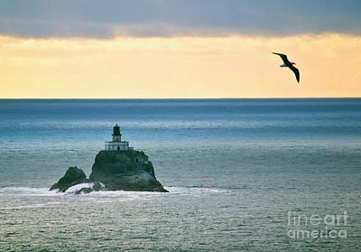 Photograph - Tillamook Lighthouse by Suzette Kallen