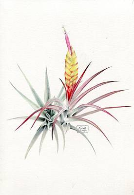 Painting - Tillandsia Concolor by Penrith Goff