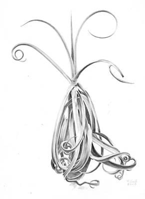 Tillandsia Drawing - Tillandsia Duratii by Penrith Goff