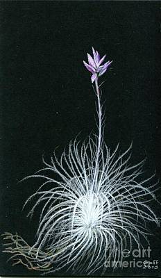 Painting - Tillandsia Tectorum by Penrith Goff