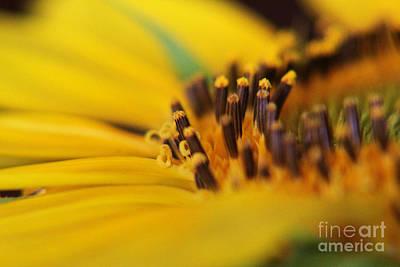 Photograph - Tilt-a-whirl by Lori Mellen-Pagliaro