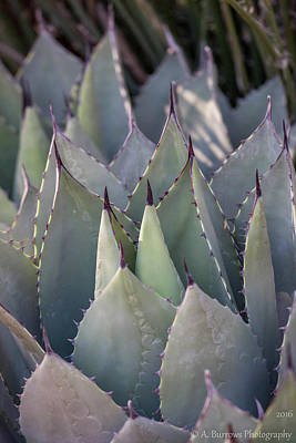 Photograph - Tilted Agave by Aaron Burrows
