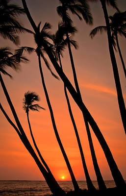 Photograph - Tilting Palms by Don Schwartz