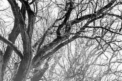 Ice Fog Photograph - Timber Tentacles by Az Jackson