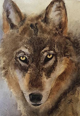 Painting - Timber Wolf by June Rollins