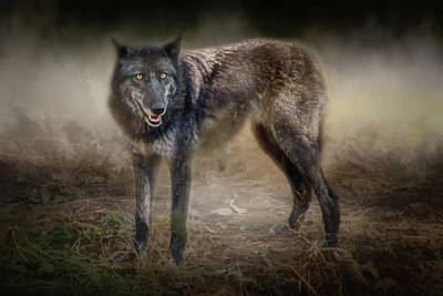 Photograph - Timber Wolf by Nikolyn McDonald