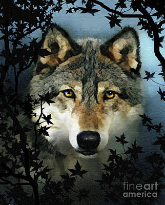 Robert Foster Painting - Timber Wolf by Robert Foster