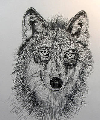 Timber-framed Drawing - Timber Wolf by Stan Hamilton