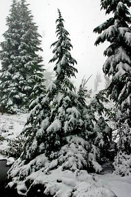 Photograph - Timberline Snow by Albert Seger