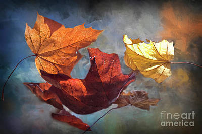 Photograph - Time And Patience - Autumn Leaves by Janie Johnson