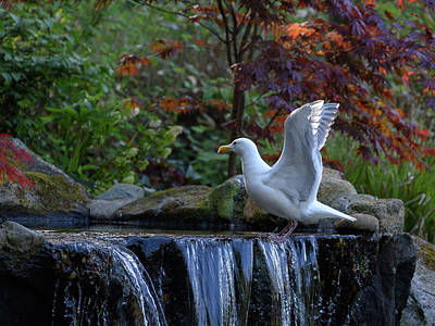 Photograph - Time For A Bird Bath by Keith Boone