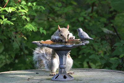 Photograph - Time For A Drink by Trina Ansel