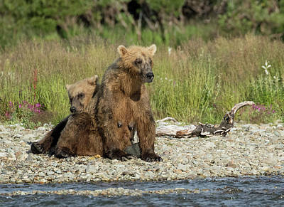 Photograph - Time For A Nap by Cheryl Strahl