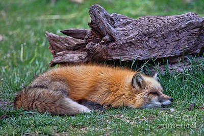 Photograph - Time For A Nap by Laurinda Bowling
