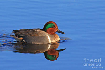 Photograph - Time For Teal by Winston Rockwell