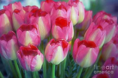 Photograph - Time For Tulips by Patricia Strand