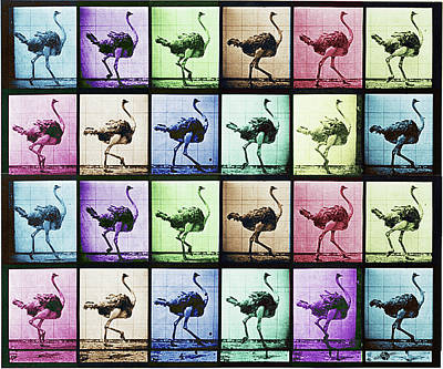 Ostrich Mixed Media - Time Lapse Motion Study Ostrich Color by Tony Rubino