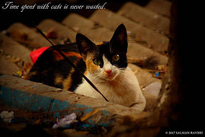 Photograph - Time Spent With Cats. by Salman Ravish
