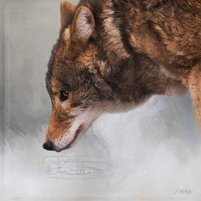 Photograph - Time To Breathe - Wolf Art by Jordan Blackstone