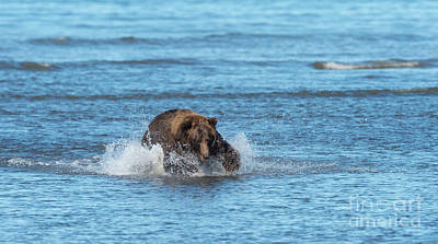 Photograph - Time To Fish - Alaska by Sandra Bronstein