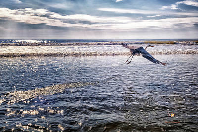 Photograph - Time To Fly by Joedes Photography